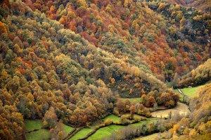 Outono no bosque atlántico