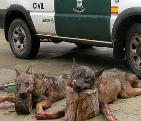 lobosmuertos